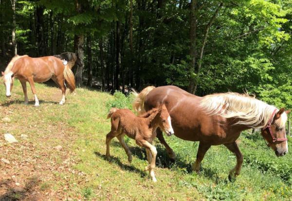 Pferdezucht Schmalzenhof Hofstetten