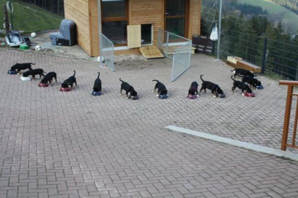 Hundezucht Schmalzenhof